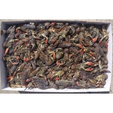 Crayfish (Frozen) - 6kg box