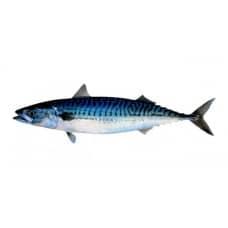 Mackerel IQF (20-30 cm) - 1kg Pack