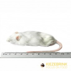 Jumbo Mice +30gm (pack of 10)