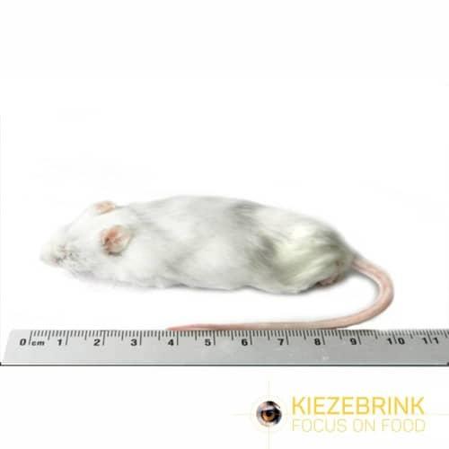 Jumbo Mice 30gm Pack Of 10