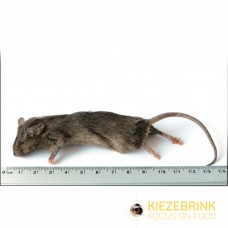 Large Mice 22-30gm (pack of 10)
