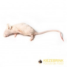 Hairless Mice (ungraded) - per kg