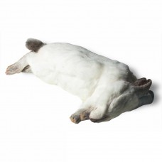 Large Rabbit (1-2kg)