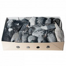 Pigeon - 10 pc./box