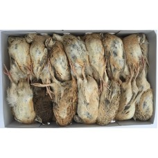 English Ex Layer Quail - Box of 20