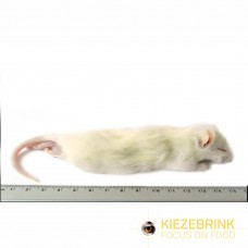 Large Weaner Rat 60 - 90gm (pack of 5)