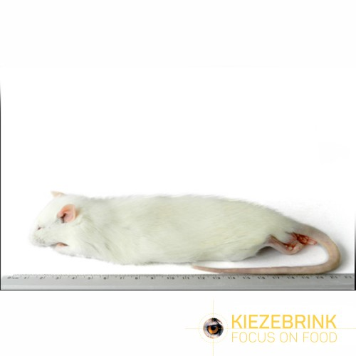 Regular Rat 150 250gm