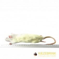 Small Rat (90 - 150gm)