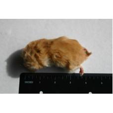 Hamster - Regular 30gms - 60gms