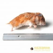 Hamster - large 60>
