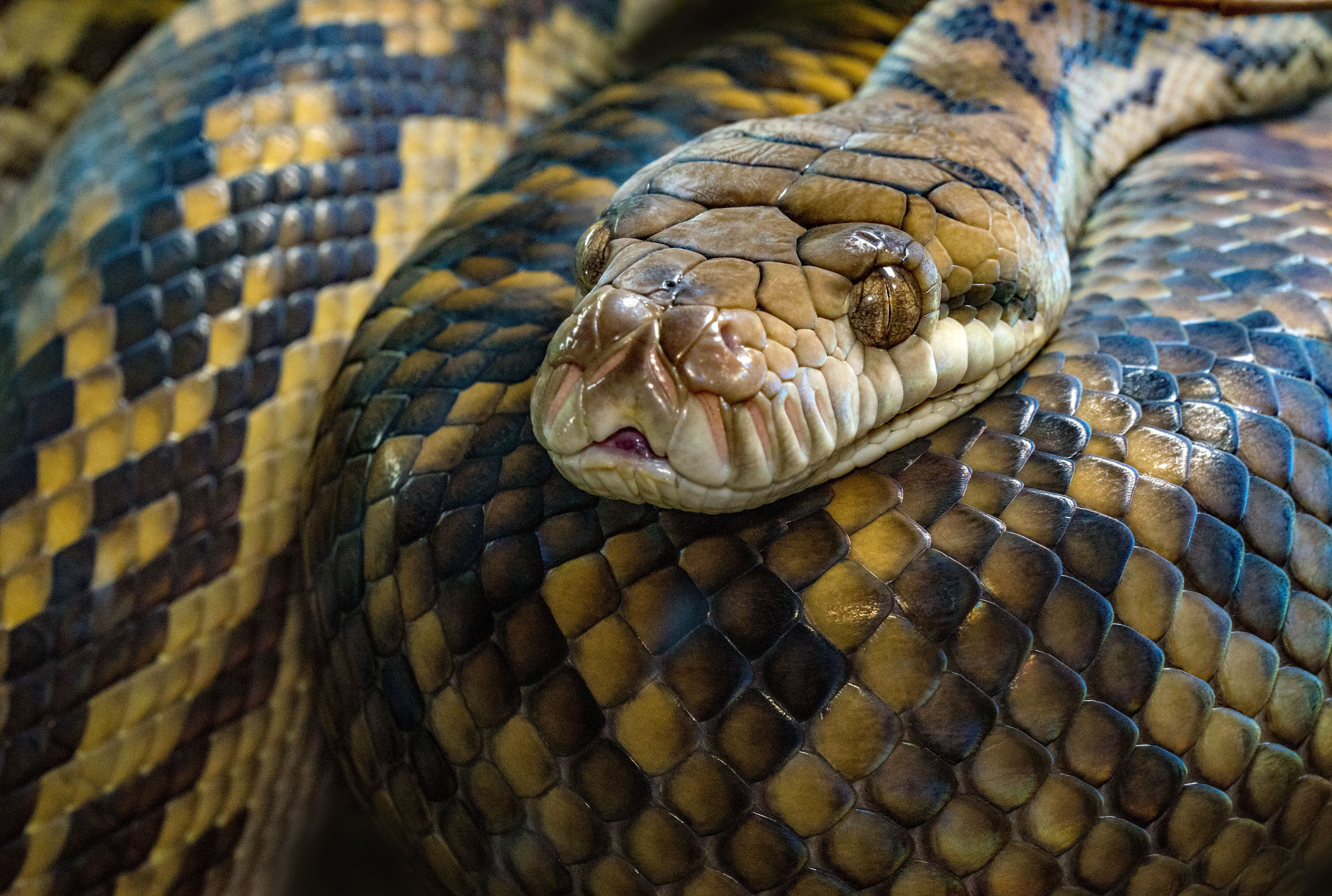What is it Like to Have a Pet Snake?