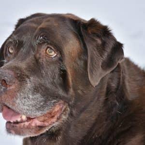An older/senior dog